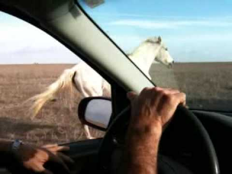 How to catch a wild horse Music Videos