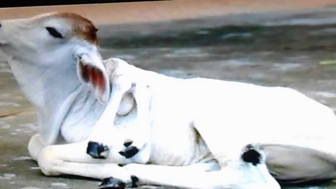 Real Mutant Animals Genetic Mutations from