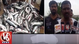 Mass Fish Death In A Lake In Rampally Village | Medchal