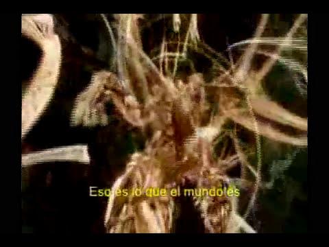 Terence Mckenna - La Cultura No Es Tu Amiga (version extendida)