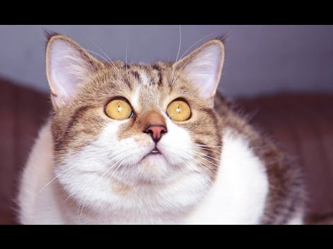 Too Cute moments of Funny Cat Rocky life
