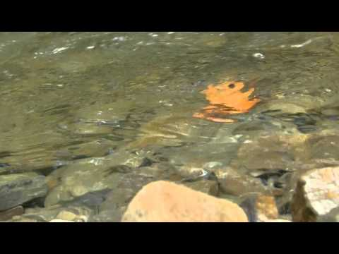 3h - Muzyka Relaksacyjna - Szum Wody - Uspokajająca - Strumyk