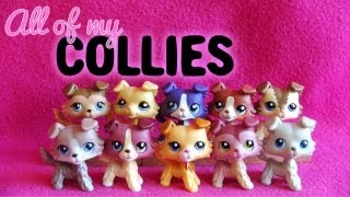 All of My LPS Collies!