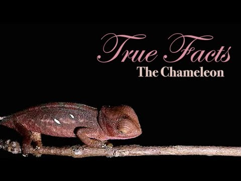 True Facts About The Chameleon