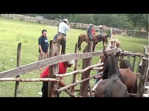 Píales a Caballo en Poturo
