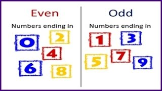 Even & Odd Numbers lesson for kids