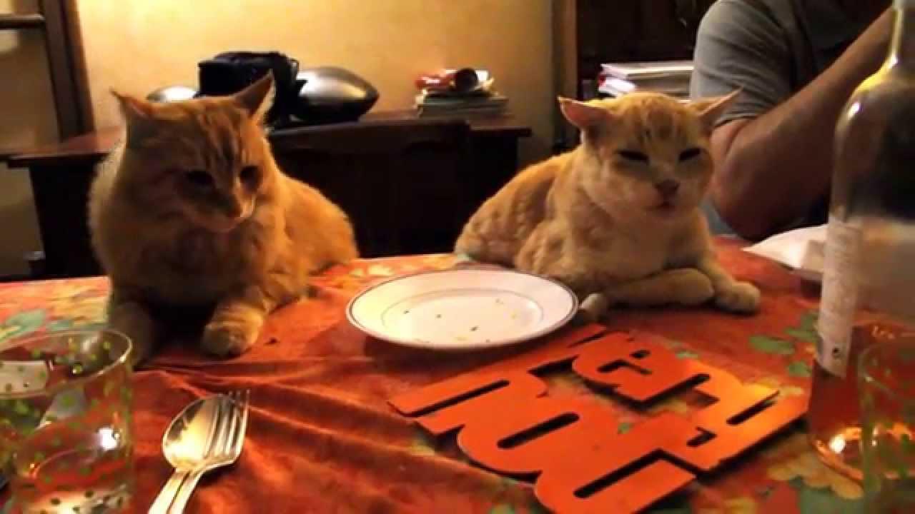 2 chats qui mangent table assis sur une chaise youtube for Assis sur une chaise