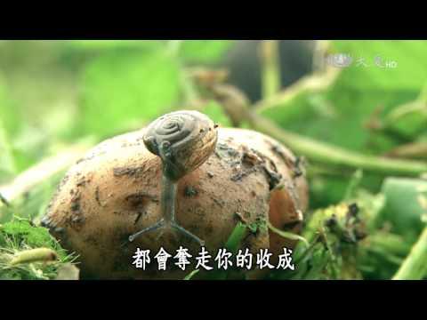 台綜-農夫與他的田-20160815 花蓮的大王菜舖子