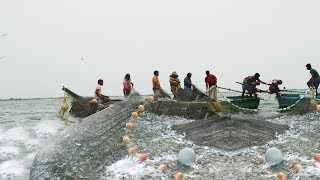 Fish Crowd - Fisherman Sort Their Big Net Catch From The Local Village