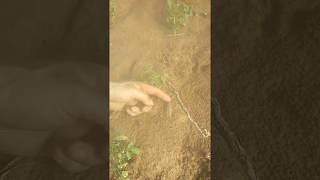 Arrowhead Hunting in Western Ky,