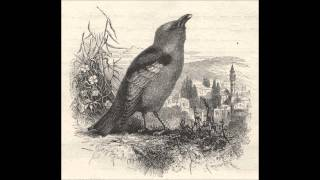 Watch Songs Ohia Calling Bird video
