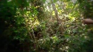 bangladeshi Bear Grylls Man vs Wild HD video 2016 (part 2)