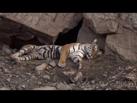 Ranthambore Tiger Reserve, Rajsthan, India