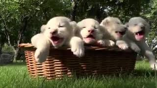 TRY NOT TO LAUGH   Funny Cat and Dog Videos