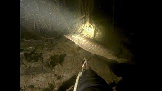 Подводная охота ночью