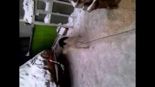 VIDEO1066