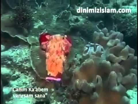 Canım Kabem Varsam Sana (Müziksiz Ilahi)