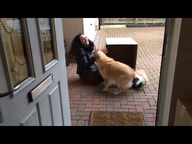Former Owner Surprises Dog By Hiding in a Box