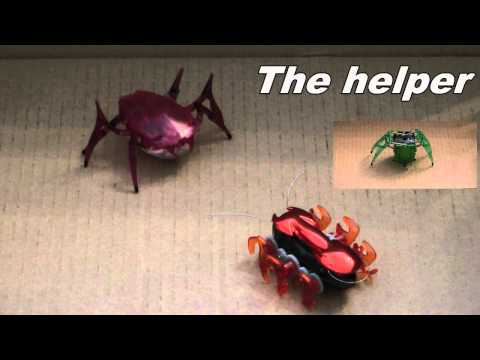 The All New Hexbug Scarab!!!