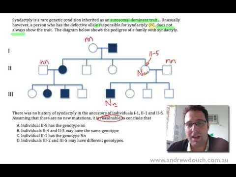 Pedigree Analysis No. 3