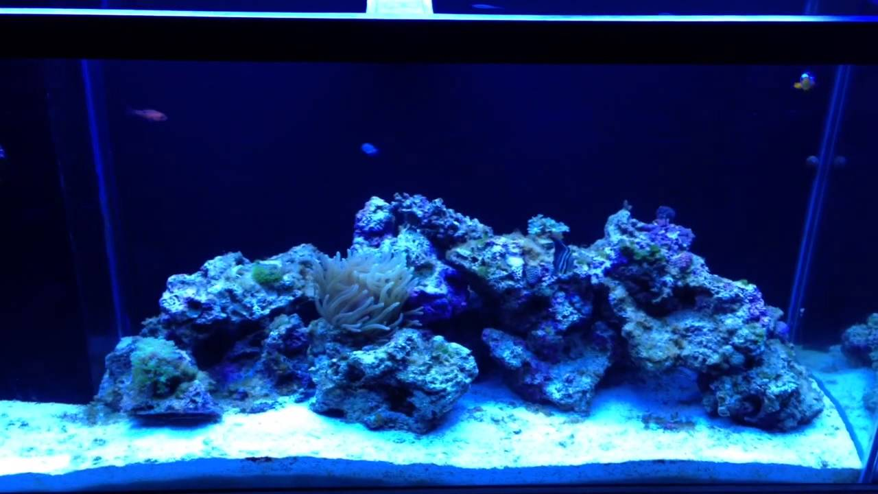 Buying your first salt water fish reef tank on craigslist for Free fish tanks craigslist