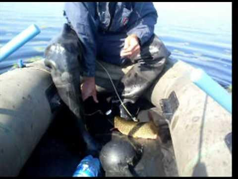 видео рыбалка в беларуси 2016 го года видео