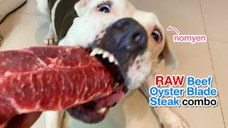 nomyen 1st time VS. Beef Oyster Blade Steak combo [ASMR] RAW diet MUKBANG 犬が生の肉を食べる 개는 날 음식을 먹는다 4K