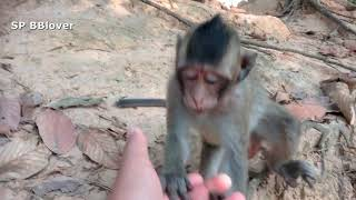 Monkey That Lost Newborn Baby Has Good Health