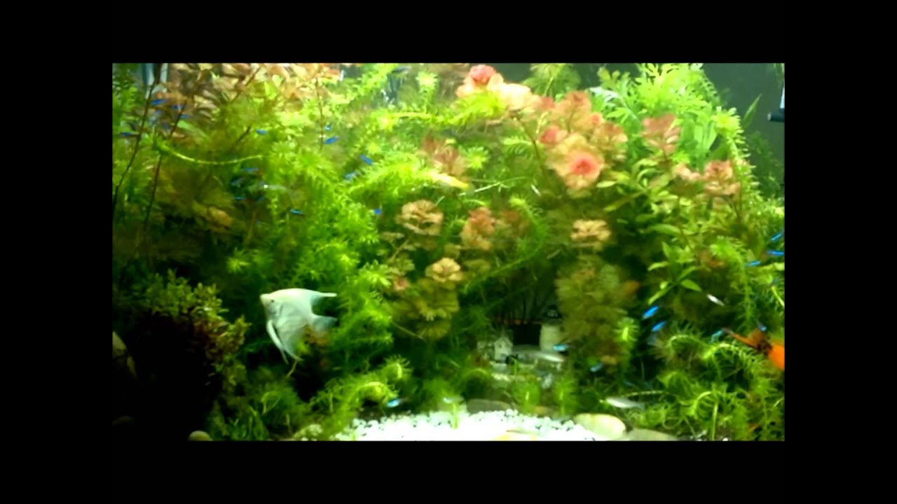 Aquarium Plants Youtube Aquarium Plants For Beginners