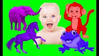 Dạy bé học nhận biết các con vật hay nhất | Learn Animals for kids | Funny School