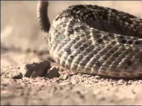 Holes 2003 Full Movie HD.mp4