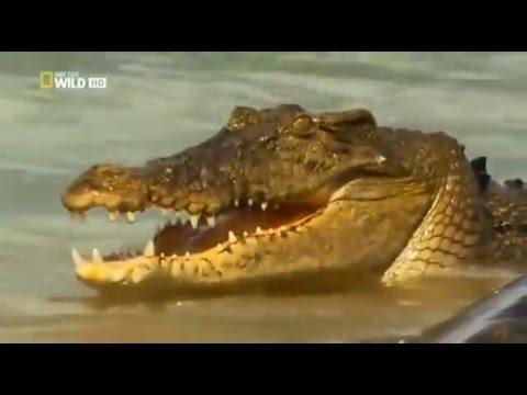 Атака крокодилов