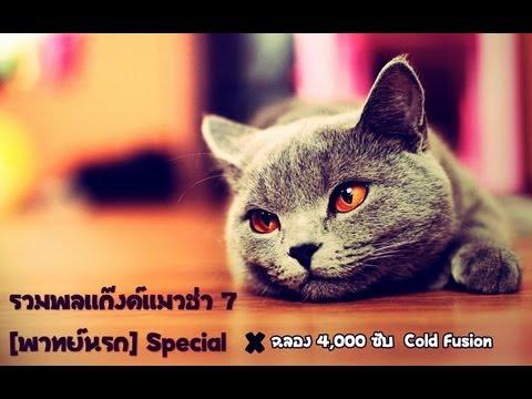 รวมพลแก๊งค์แมวฮ่า 7 [พากย์นรก] Special / ฉลอง 4.000 ซับ + Cold Fusion / # 2