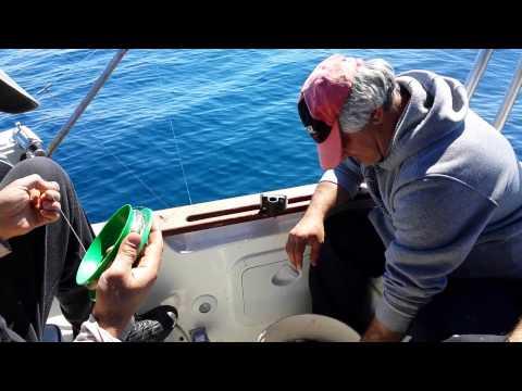можно ли в греции ловить рыбу