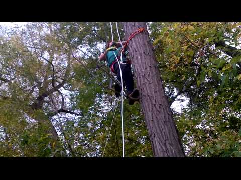 Liam Logue Landscaping (Arborist training day 2)
