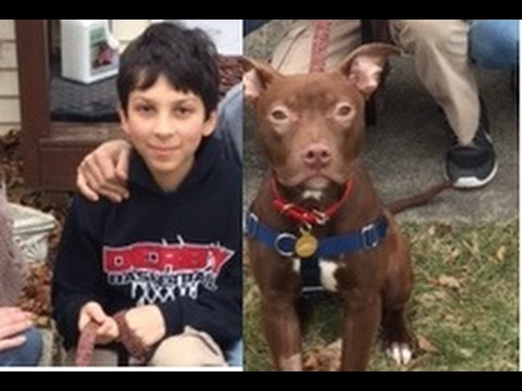 Boy Meets Dog: The Bond Between Children and Adopted Pets