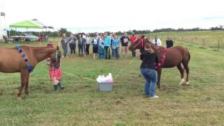 Gender Reveal with My Horses