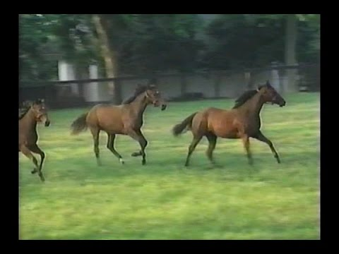 """Horse Racing - """"Conformation: How To Buy A Winner"""""""