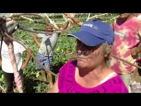 Rreshjet dëmtojnë të mbjellat, fermerët kërkojnë ndihmë - Top Channel Albania - News - Lajme