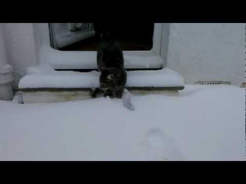 Cat meets snow (Original)
