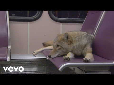 Modest Mouse: Coyotes