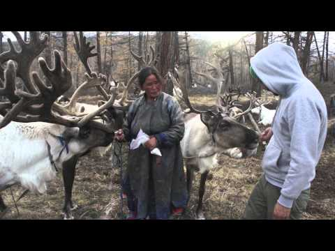 Living With The Tsataan - Mongolia's Reindeer Herders