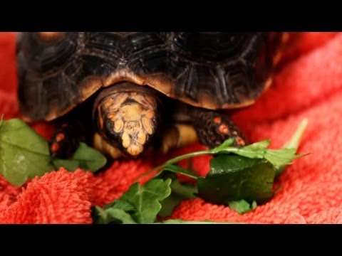 What Should You Do if Your Turtle Won't Eat? | Pet Turtles