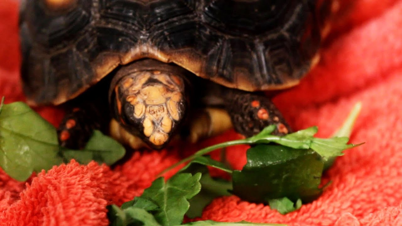 What to Do If Your Turtle Wont Eat Pet Turtles - YouTube