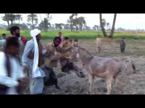 Saraiki Fun video