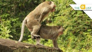 4 Weird Ways Animals Have Sex