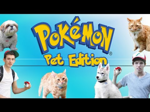 POKEMON :  Pet Edition