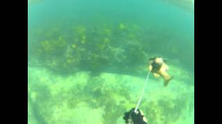 Spearfishing at Cronulla