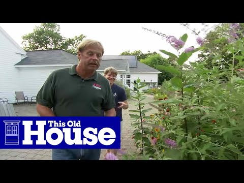 How to Plant a Butterfly Garden - This Old House