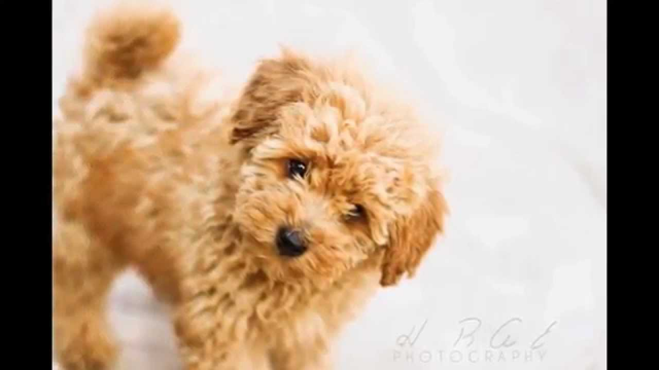 Cutest Dog Breeds in The World Top 20 Cutest Dog Breeds While